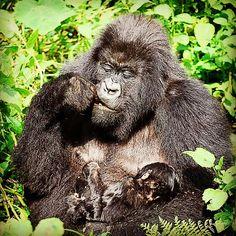 Happy Friday!  #weekend #goodtimes #nyc #rwanda #gorilla #motherhood