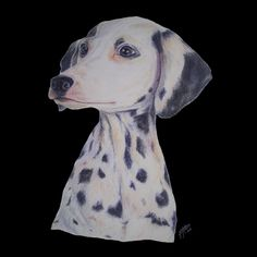 Pet portrait drawing of a dalmatian dog breed.