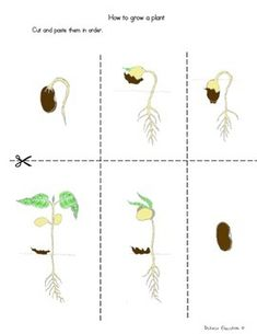 Science Activity Step by Step Instructions Look at the pictures and think… How Plants Grow, Growing Plants, Succulent Wall Art, Plant Wall, Plant Science, Science And Nature, Container Gardening, Gardening Tips, Plant Life Cycle Worksheet