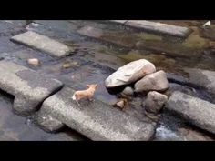 Little dog playing fetch by himself with the aid of a stream