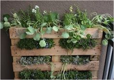 A plant rack for the herbs in your garden.