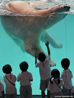 53 Best Inuka images in 2018 | Polar bears, Singapore zoo