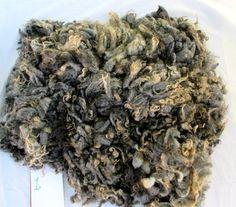Een hele ruwe wol van vers sheared Gotland kruising wol, 1.3 kg, spin, voelde, decoreren, verend krullend vezels, grijs, 1