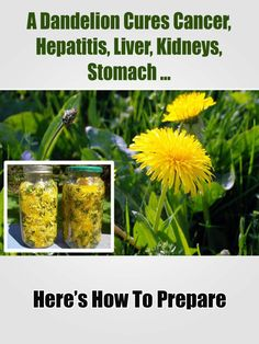 Dandelion is an extremely beneficial plant, which effectively detoxifies the liver, treats allergies, has diur
