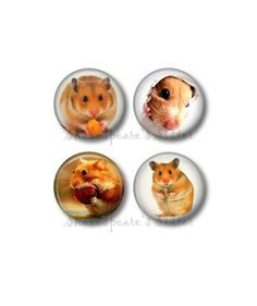 Hamster Magnets  Fridge Magnets  Animal by ShakespearesSisters