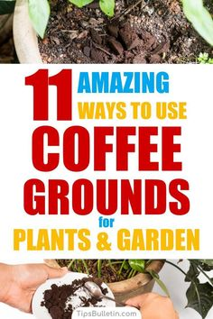 Rose Gardening For Beginners 11 Ways to use coffee grounds in the garden including as fertilizer and for pest control. Coffee grounds work wonder if mixed with egg shells, especially on vegetables like tomatoes but also on plants like roses or hydrangeas. Slugs In Garden, Garden Insects, Garden Pests, Garden Fertilizers, Coffee Grounds For Plants, Organic Insecticide, Japanese Beetles, Organic Gardening Tips, Vegetable Gardening