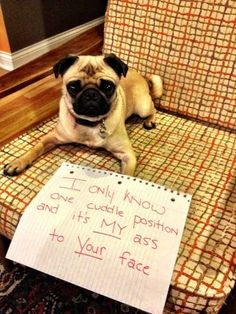 Anyone who's experienced pug cuddles, has experienced this lovely occurrence. | 23 Photos That Prove Pug Shaming Is The Best Kind Of Dog Shaming