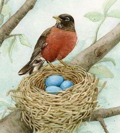 American Robin by nest