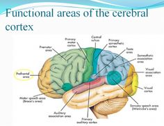 NEURO PSYCHIATRY –  OUR COMMITTMENT PSYCHIATRIC NURSING ppt