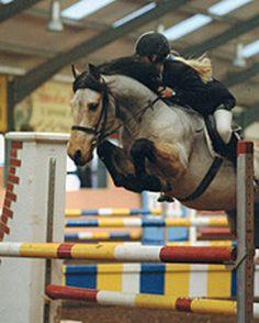 Whee!  Connemara pony