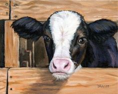 Calf with Fence (Dottie Dracos)