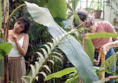 """""""Mama's Casting a Spell"""" sigue una serie de gestos extraños realizados por bailarinas en el Jardín Botánico, quienes interactúan sensualmente con las hojas, la corteza y los pétalos, traspasando los límites establecidos para separar a los visitantes de las colecciones del museo y a los seres humanos de las plantas. Estas visiones exuberantes se cruzan con escenas de un taller dirigido por Ana Roquero, experta en plantas de tintura, que instruye a Mercedes sobre la producción de tinte… Outdoor Furniture, Outdoor Decor, Lush, Woodlice, Adrenal Cortex, Pull Apart, Leaves, Museum, Exhibitions"""