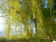 Summer Willow 8, there's another one just like it, but a little to the left