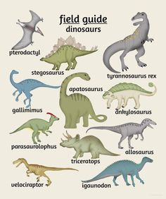 Field Guide to Dinosaurs Poster - features a Tyrannosaurus Rex, Stegosaurus, Triceratops and more. Perfect for a dinosaur nursery or kids bedroom. #dinosaur #Nursery