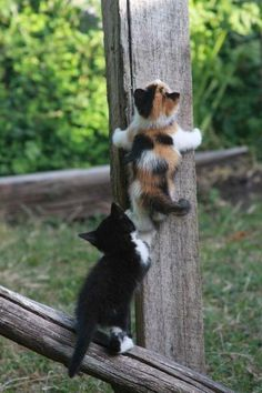 Two Cute Kittens Pretty Cats, Beautiful Cats, Animals Beautiful, Cute Baby Animals, Animals And Pets, Funny Animals, Cute Cats And Kittens, Kittens Cutest, Kittens Playing