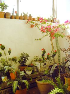 baby bougainvillea and a sea of plants~