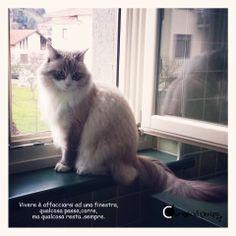 #gatti #aforismi #finestra # cat #window