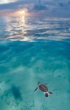 sea turtles!!!!