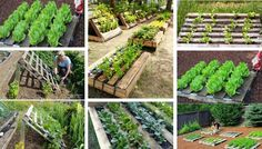 Smart DIY gardening ideas on pallets Look how wonderful … Let's see how to make a pallet garden. See also the best ideas to have a beautiful and creative vegetable garden at home. Vintage Gardening, Organic Gardening, Gardening Tips, Home Vegetable Garden, Home And Garden, Grand Serre, Decorative Garden Fencing, Sweet Chestnut, Garden Planters