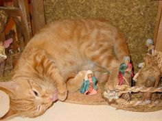 """Cats Demand Rightful Place In Nativity Scene With Sheep, Oxen, Donkey:  New biblical translation suggests that Mary had a Calico named """"Snuffles"""" with her on night of Savior's birth, by Allan Ishac -- BullshitIst, on Medium -- 12-25-16"""