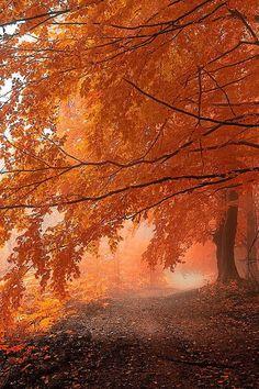 Orange Daze