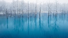 "This ""blue pond"" is the wonderful pond which changes colors every day.   All are nature's tints.   Biei in Hokkaido,Japan."