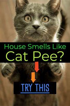 dog urine smell out of carpet old - dog urine smell out of carpet ; dog urine smell out of carpet old ; dog urine smell out of carpet dried ; dog urine smell out of carpet diy ; dog urine smell out of carpet vinegar Cleaning Pet Urine, Remove Cat Urine Smell, Cat Pee Smell, Cat Urine Smells, Remove Stains, Pet Urine Cleaner, Dog Urine, Pet Odors, Urine Odor