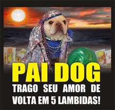 https://www.facebook.com/Humor.Animal.Oficial