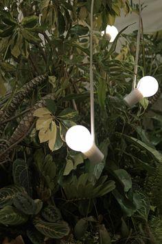 Ideal Home Show, Lighting, Plants, Home Decor, Decoration Home, Room Decor, Lights, Plant, Home Interior Design