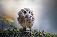 Tiere | Ziny hat das Foto mit folgenden Metadaten aufgenommen: Größe: 3000×1965, Blende: f/2,8, Brennweite: 300 mm, Belichtungszeit: 1/500 s, ISO: 125, Kamera: NIKON D4, Zeitpunkt: 11
