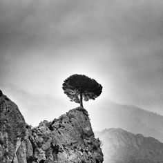 Lonely tree standing alone in the beautiful Spanish landscape. Ragnar, Ipa, Lonely, Spanish, Photographs, Landscape, Flowers, Beautiful, Photos