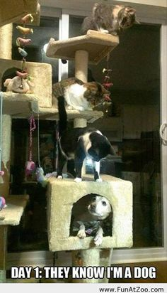 Cute dog is hated by cats - Funny Picture
