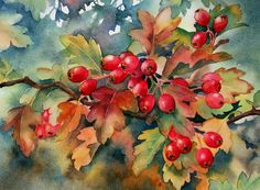 Ann Mortimer's Painting Blog: Autumn Hawthorn berries with Centre of England Arts