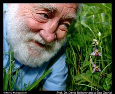 David Bellamy made me want to be a Naturalist when I was little - loved his passion for the environment and his beard.