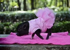 A pig is seen at a park in Mexico City on October 15, 2015.
