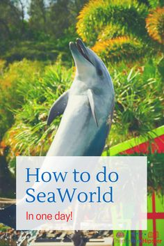 SeaWorld Park Map | SeaWorld Orlando | Sea World | Pinterest ...