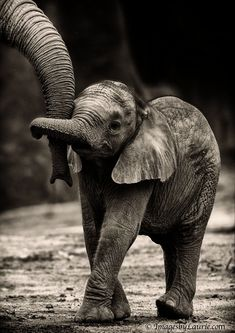Cute baby Elephant holding trunks I love this just as a photo too it has really captured the moment perfectly