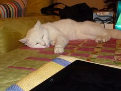 relax on a quilt