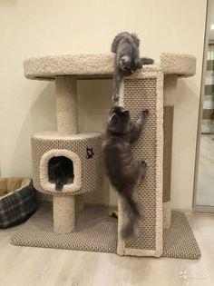 купить для кошки домик: 21 тыс изображений найдено в Яндекс.Картинках