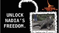 Please release Nadia the baby elephant to a sanctuary immediately and let her live the life she deserves!