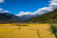 Did you know best time to visit Bhutan? ✈️🇧🇹️🏔️Spring months in Bhutan are from Mar to May. Spring season is the favorite time to visit Bhutan for flower lovers. As the snow is melting down and flowers are booming
