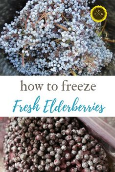 Freezing elderberries is a great way to preserve fresh elderberries. When are wild elderberries ready to harvest? Find out when to harvest elderberries, Elderberry Syrup, Elderberry Ideas, Elderberry Cuttings, Healthy Fruits And Vegetables, Wild Edibles, The Fresh, How To Dry Basil, Preserves, Recipes