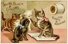 Victorian Advertising - Kitty Class by Yesterdays-Paper.deviantart.com on @DeviantArt