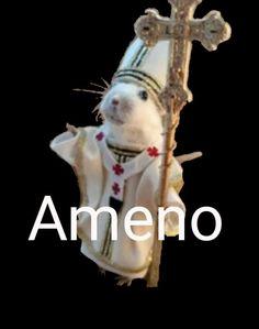 Funny Rats, Cute Rats, Cute Hamsters, Funny Laugh, Funny Animal Pictures, Funny Animals, Cute Animals, Animal Memes, Stupid Funny Memes