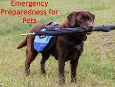 Emergency Preparedness for Pets Emergency Preparation, Emergency Kits, My Little Monster, Survival Mode, Dog Pin, Disaster Preparedness, Natural Disasters, Dog Care, Mans Best Friend