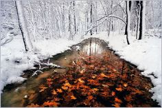 Frozen river, leaves layered in ice.