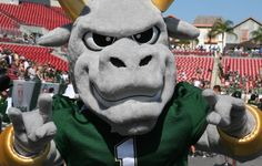 The story behind #USF's Rocky the Bull--inspiration came from Florida Agriculture and even the Texas Longhorns!