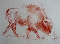 Dibujo bisonte americano en movimiento a sanguina seca
