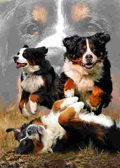http://www.hund-exquisit.de/images/product_images/original_images/berner_sennenhund_600.jpg