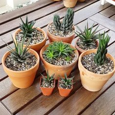 Ever wondered when and why you need to repot your succulent plants? Succulent City is here to help you with that and keep your succulents healthy! Repotting Succulents, Hanging Succulents, Cacti And Succulents, Cactus Plants, Small Succulent Plants, Potted Flowers, Planting Flowers, Succulent Gardening, Succulent Terrarium